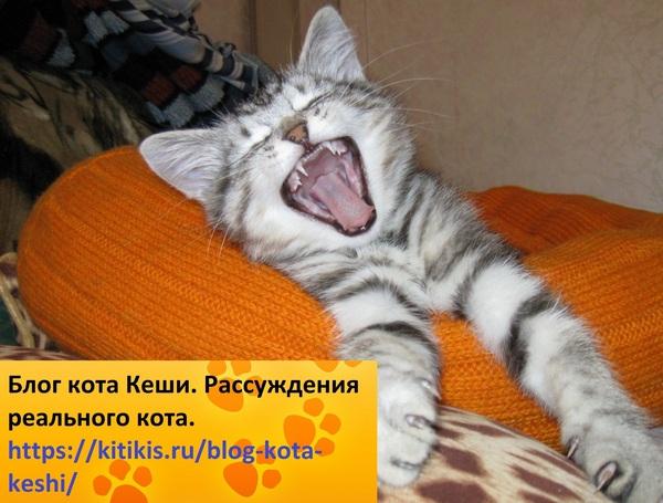 блог кота кеши